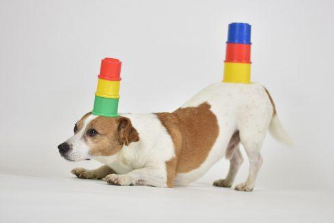 Mein Hund 2020