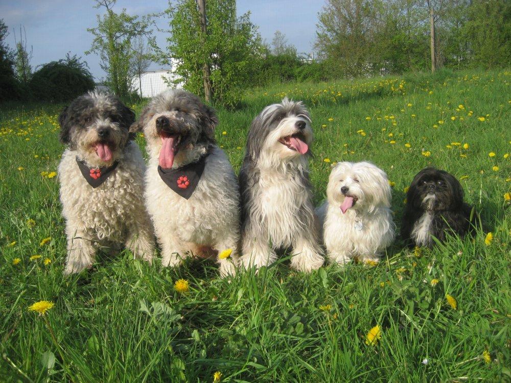 4. Mein Hund – 04. – 05. April 2020