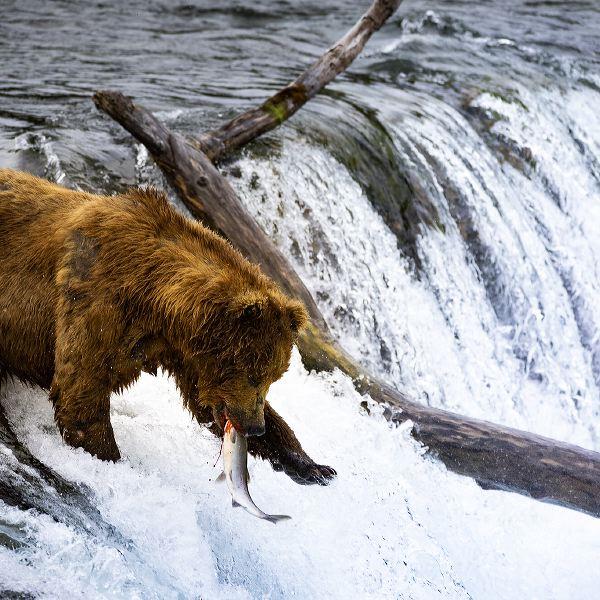 © Sebastian Caspary - Der Wahre Norden – Sehnsuchtsziel Yukon Und Alaska