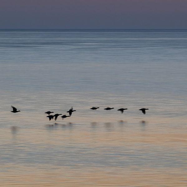 © Wolfgang Walkowiak - Die Ungleichen Schwestern - Naturfotografie Auf Den Nordseeinseln Sylt Und Amrum
