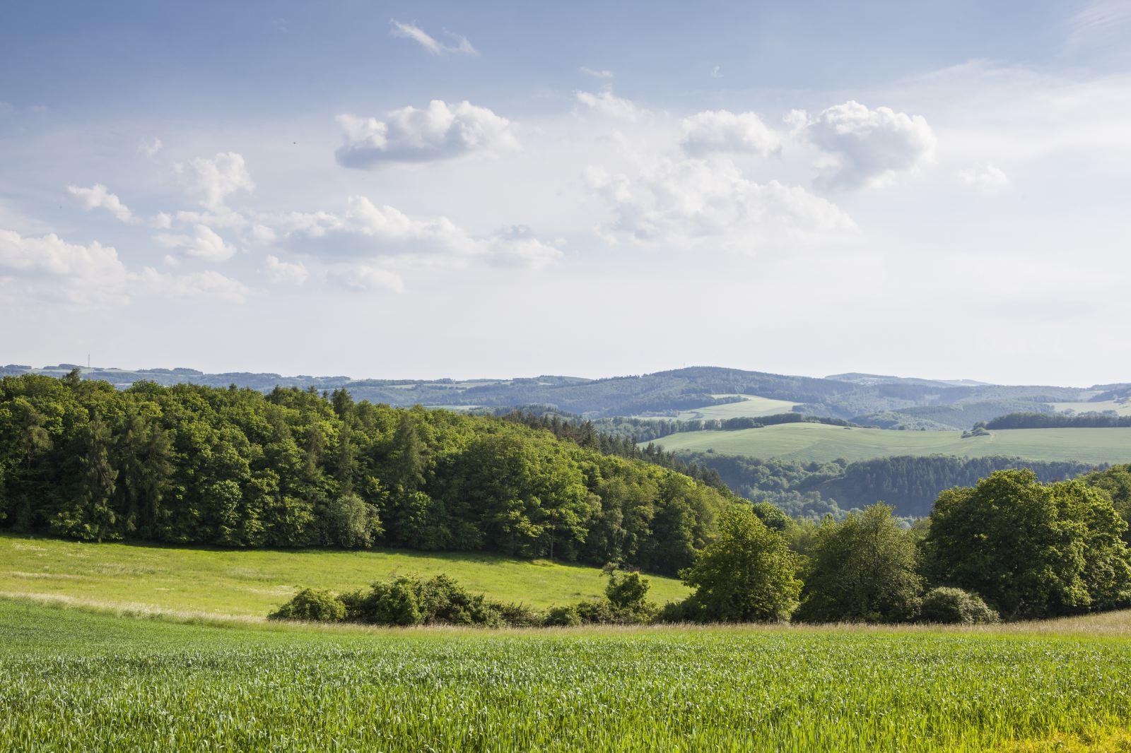 Herrstein, Mittelalterpfad - Foto © Dubois