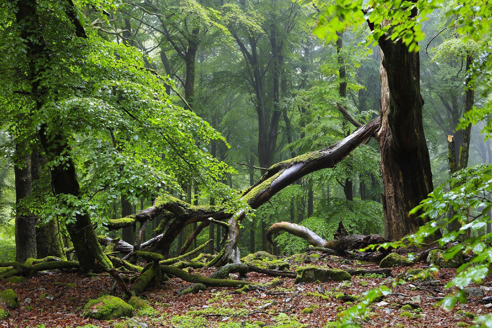 Wilder Nationalpark Hunsrück Hochwald